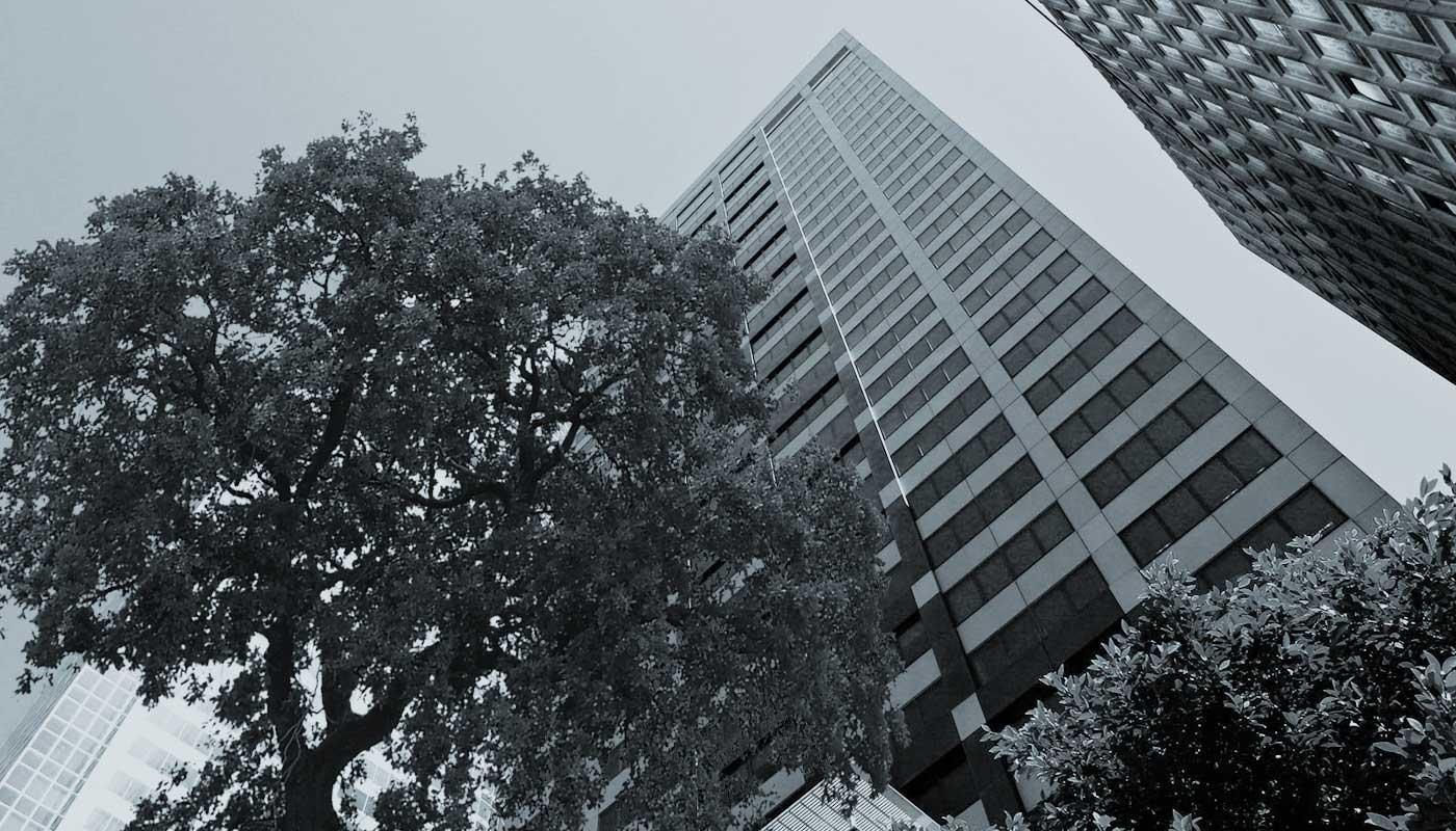 citytrees
